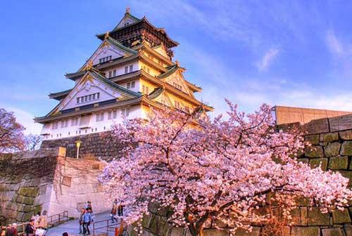 Hoa anh đào nở tại lâu đài Himeji