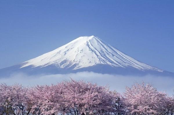 Hoa anh đào nở tại núi Phú Sĩ luôn đẹp nhất