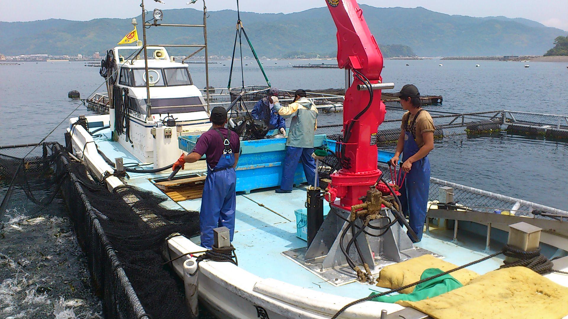 Đơn hàng thủy sản tại Nhật Bản lương cao