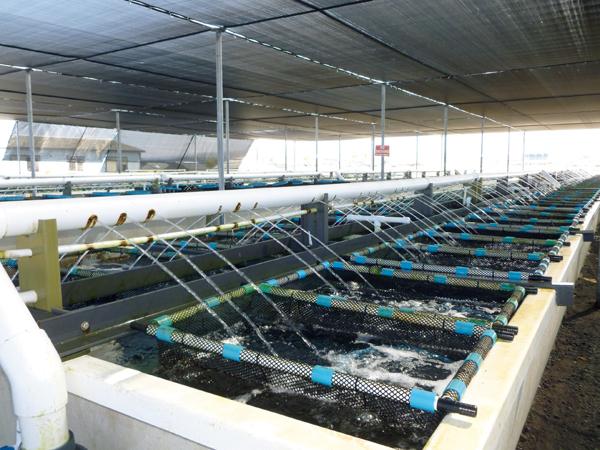 nơi làm việc của TTS đơn hàng thủy sản tại Nhật Bản