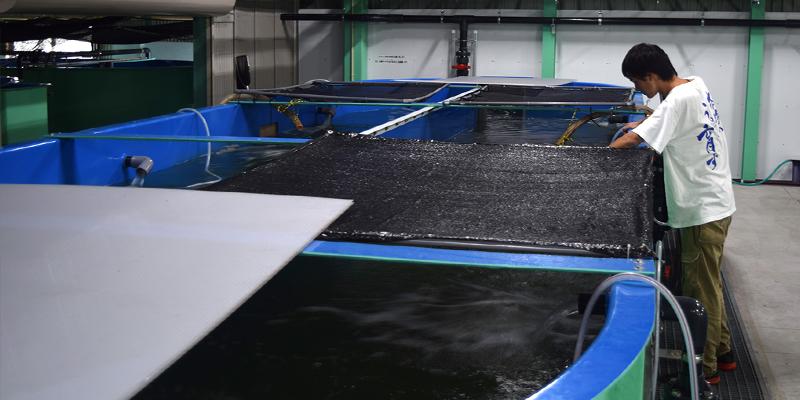 Đơn hàng thủy sản tại Nhật Bản 2017