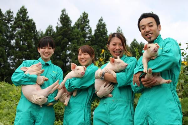 Đơn hàng chăn nuôi lợn xuất khẩu lao động Nhật Bản tốt nhất 2017