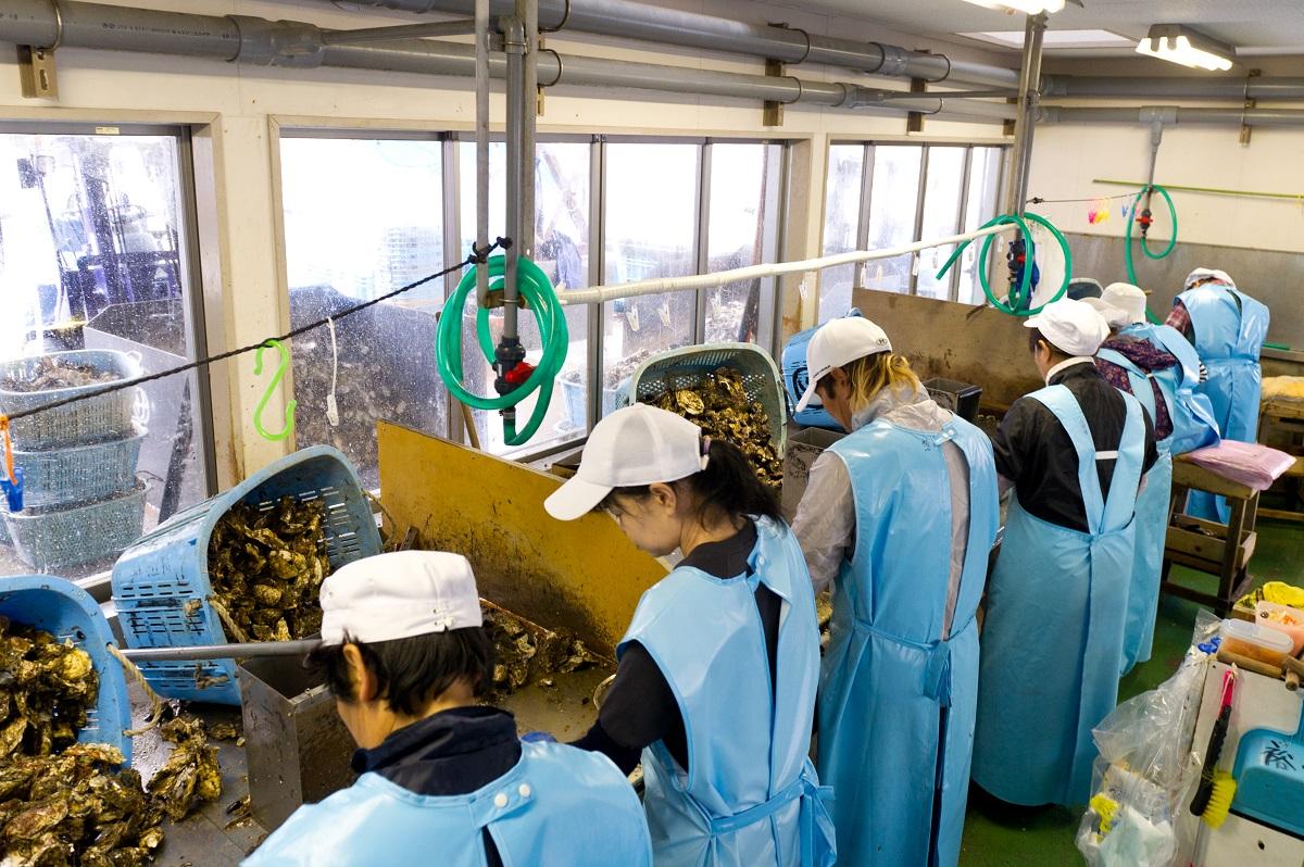 Tuyển Nam đơn hàng chế biến Hàu xuất khẩu lao động Nhật Bản 2017