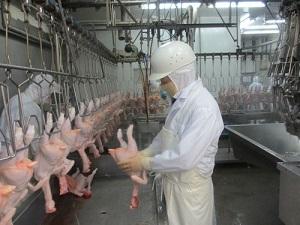 Tuyển gấp 30 nam chế biến thực phẩm làm thịt gà tại Hokkaido Nhật Bản