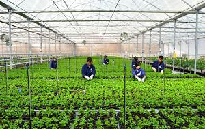 Tuyển dụng lao động đơn hàng nông nghiệp tại Nhật Bản