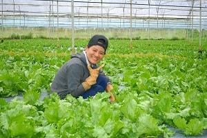 Tuyển 15 nữ xuất khẩu lao động làm trồng rau tại Nhật Bản