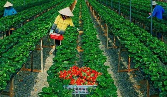 XKLĐ Nhật Bản ngành nông nghiệp: Nên đi hay không?