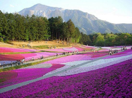 3 địa điểm du lịch không thể bỏ qua khi đi XKLĐ Nhật Bản