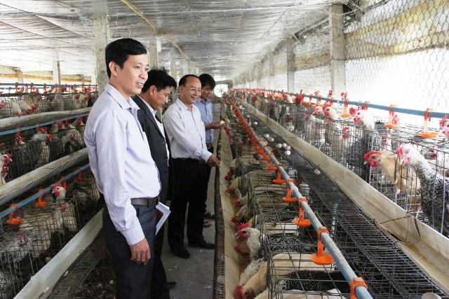 Đơn hàng chăn nuôi gà lấy trứng cần tuyển gấp 15 Nữ đi làm việc tại Nhật Bản