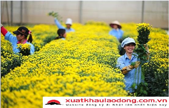 xuat-khau-lao-dong-nhat-ban-nganh-nong-nghiep