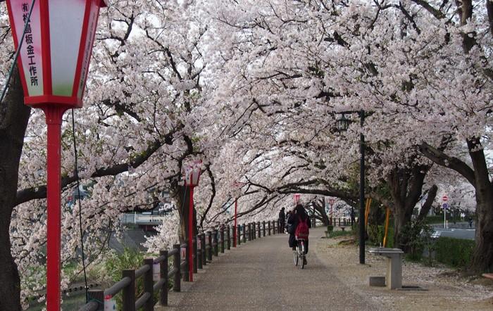 Một vài kinh nghiệm tiết kiệm tiền đi du lịch tại Nhật Bản