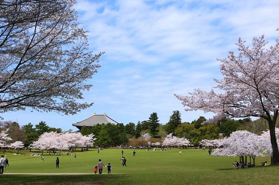 Cố đô tuyệt đẹp của Nhật Bản gọi tên Nara