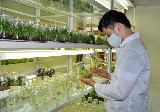 Tuyển gấp 15 kỹ sư nông nghiệp đi làm việc tại Nhật Bản