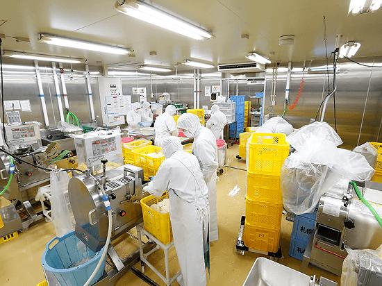 Tuyển gấp 30 lao động nữ chế biến rau củ XKLĐ Nhật Bản