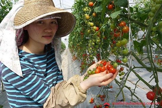 bị cận có thể đi xuất khẩu lao động ngành nông nghiệp