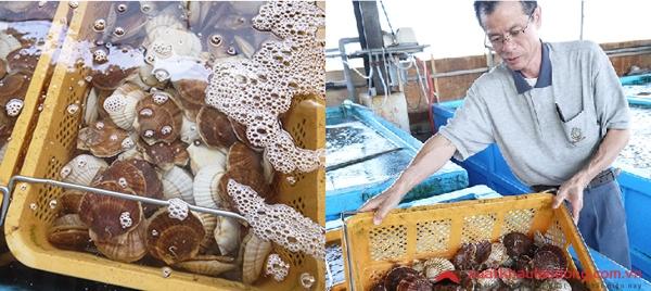 Tuyển 15 Nam đơn hàng nuôi trồng thủy sản tại Nhật Bản lương 30 triệu/tháng