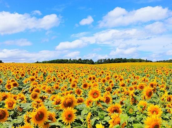 địa điểm nổi tiếng tại Hokkaido