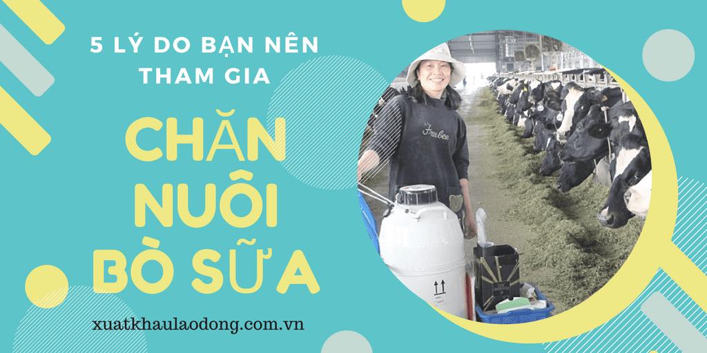 5 lý do bạn nên tham gia đơn hàng chăn nuôi bò sữa tại Nhật Bản