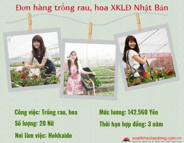 Tuyển 15 nữ xuất khẩu lao động làm trồng rau tại Hokkaido, Nhật Bản