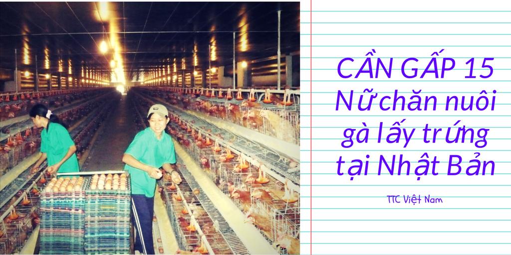 CẦN GẤP 15 Nữ chăn nuôi gà lấy trứng tại Nhật Bản