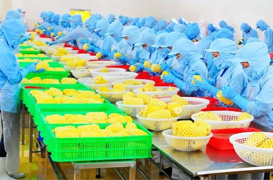 tổng hợp đơn hàng xklđ tại tỉnh hyogo, nhật bản