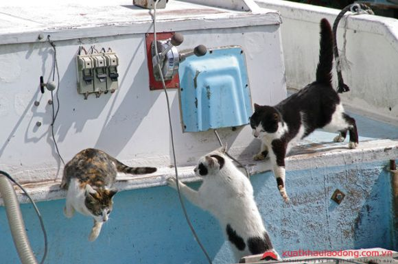 Đảo mèo Okishima Nhật Bản