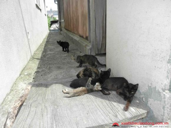 Đảo mèo Aijima nhật bản