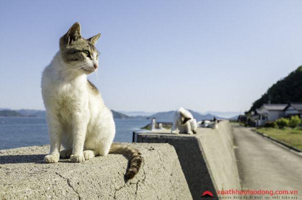 đảo mèo Sanagishima nhật bản