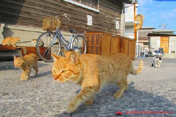 đảo mèo Muzukijima nhật bản