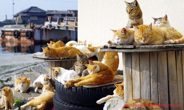 đảo mèo Kadarashima nhật bản