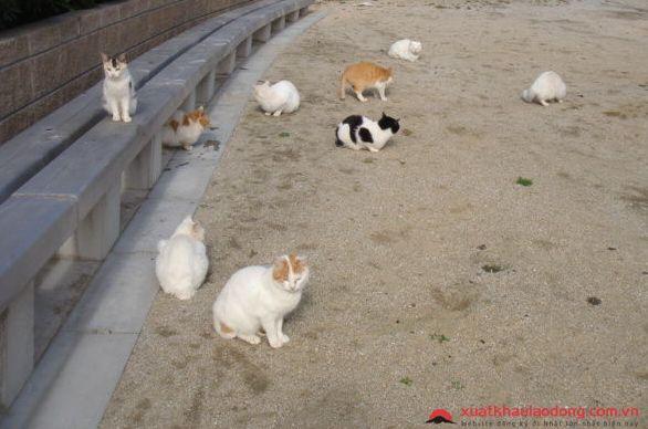 đảo mèo Genkaishima nhật bản