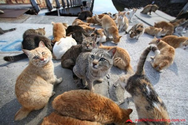 đảo mèo Manabeshima nhật bản