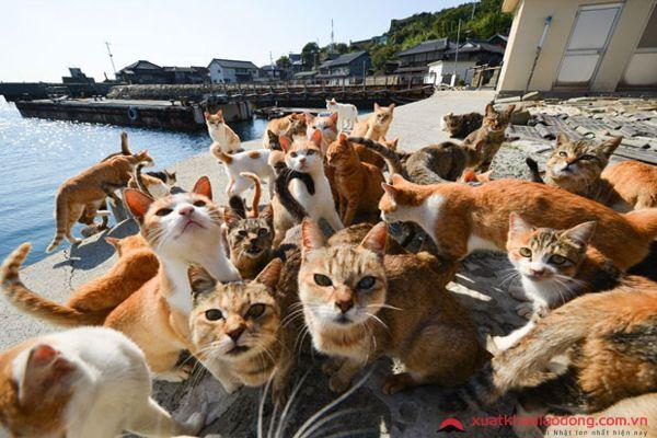đảo mèo enoshima nhật bản