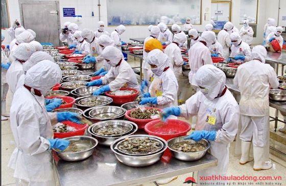 Ngành chế biến thực phẩm không đòi hỏi kinh nghiệm và tay nghề