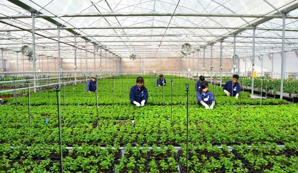 2 Nữ trồng rau tại Hamamatsu tháng 8/2013