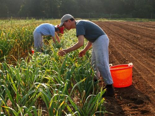 10 Nam làm nông nghiệp tại Aichi tháng 11/2013