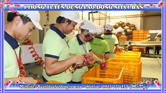 Nhật Bản sẽ đầu tư mạnh vào thị trường nông nghiệp Việt Nam