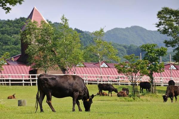 Giới thiệu về tỉnh Hyogo, Nhật Bản
