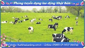 Tuyển gấp 12 nữ chăn nuôi bò sữa tại Hokkaido tháng 10/2016