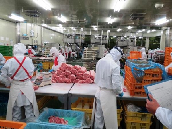 Công việc chế biến thịt bò, thịt lợn của thực tập sinh tại Nhật Bản
