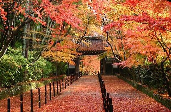 Màu áo sặc sỡ vào mùa thu của công viên Meijo, tỉnh Aichi Nhật Bản