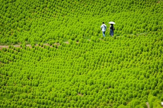 Khám phá vẻ đẹp tỉnh Ibaraki - Vùng đất quyến rũ của Nhật Bản