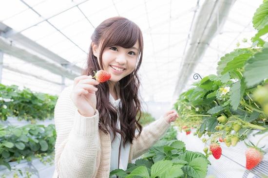 Thưởng thức những trái dâu tây tươi ngon ngay tại vườn là trải nghiệm đáng nhớ khi có dịp đến Chiba