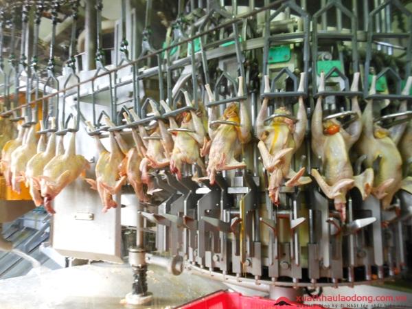 đơn hàng chế biến thịt gà làm việc tại Nhật Bản