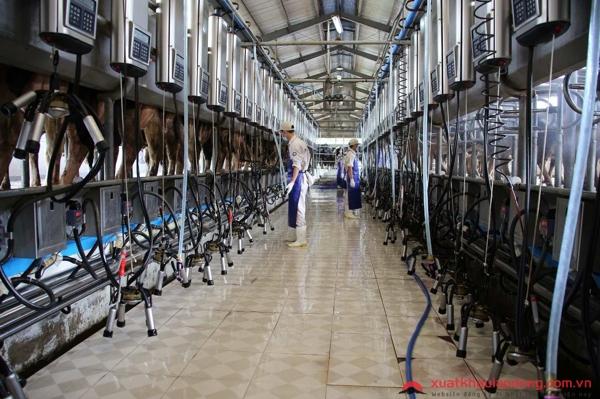 Kỹ sư nông nghiệp chăn nuôi tại nhật