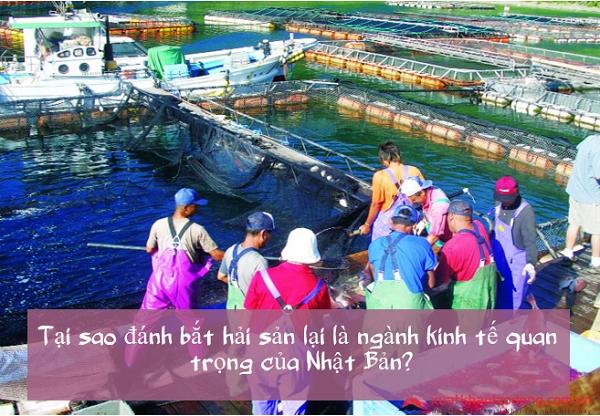 Tại sao đánh bắt hải sản lại là ngành kinh tế quan trọng của Nhật Bản?