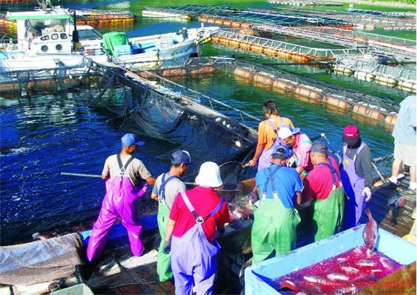 Tại sao đánh bắt hải sản lại là ngành kinh tế quan trọng của Nhật Bản