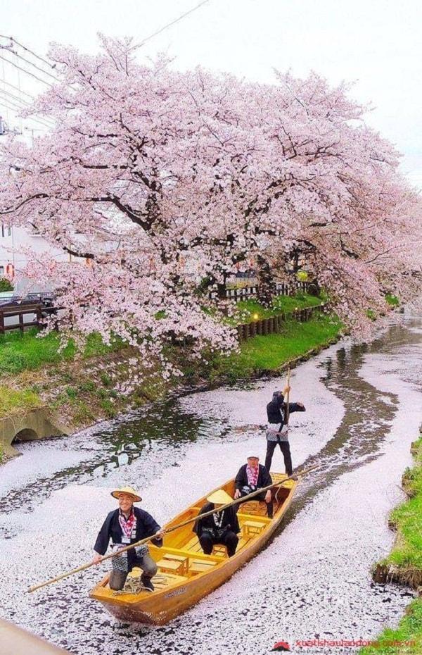 Nhiệt độ ở Nhật Bản vào mùa xuân