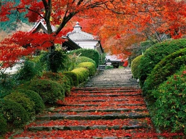 Nhiệt độ ở Nhật Bản vào mùa thu