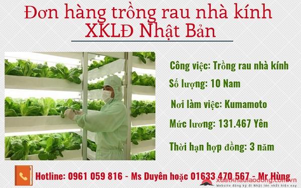 đơn hàng nông nghiệp trồng rau nhà kính